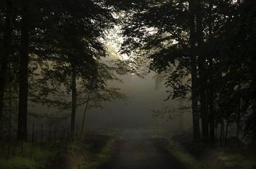 Ardennes Forrests