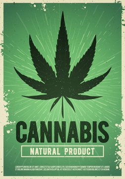 Vector medical cannabis plant, marijuana, weed poster design in grunge style. Natural product of organic hemp. For flyer and banner