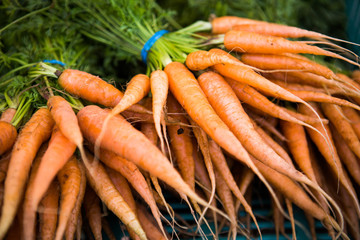 Bunch of Carrots, farm in Valle de Guadalupe, Mexico.