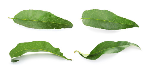 Set with green peach leaves on white background
