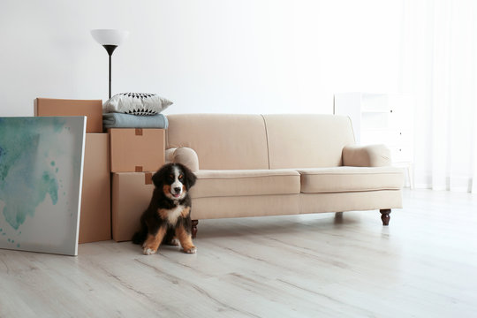 Cute puppy near moving boxes in living room
