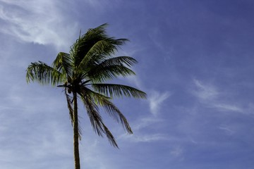A single palm tree set to the left side of the image frame.