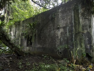 Printed roller blinds Grocery Remains of a World War II Japanese military command centre on Eten Island in Chuuk State (formerly Truk Lagoon), Micronesia