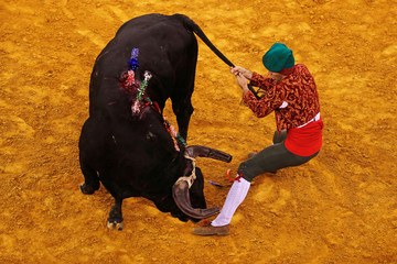 A member of Aposento do Barrete Verde forcados group performs during a bullfight at Campo Pequeno bullring in Lisbon