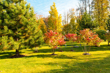 autumn landscape in a beautiful park