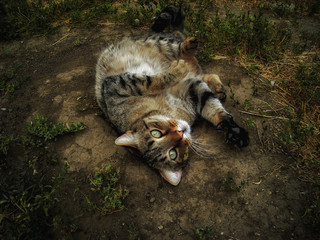 Cat. Cat lies on the ground. Funny cat closeup. Portrait of a cat. A domestic cat lying on the ground. Grunge