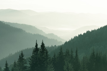 Mountains covered with woods in the early morning mist