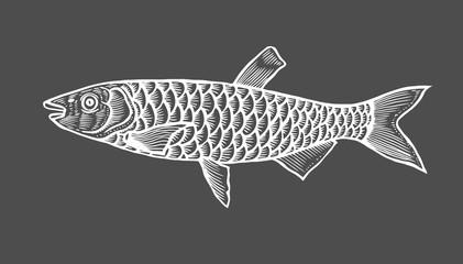 Ink sketch of fish