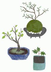 bonsai and kokedama