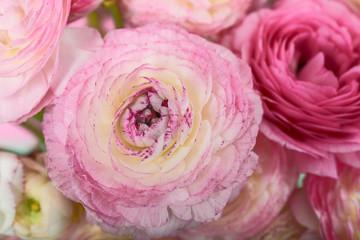 Extreme closeup of pink ranunculus