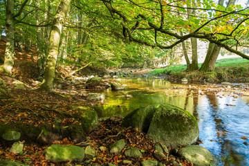 Vattendrag genom naturreservat