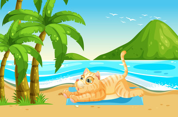 Yellow cat relax at the beach