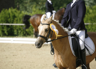 Sport horse head portrait closeup under saddle during competition outdoors