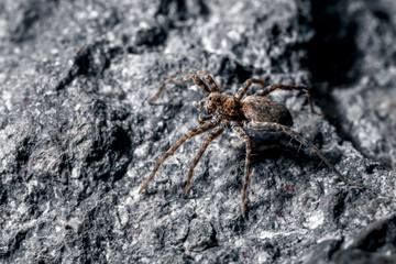 Macrophoto of a spider.