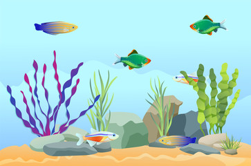Aquarium Fish Swimming Among Stones and Seaweed