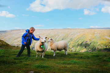 little boy and sheeps in mountains, kids travel learn animals