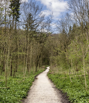 Millington Woods in early spring