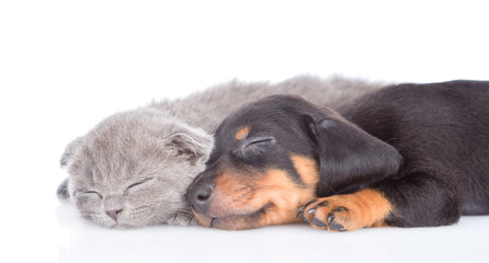 close up puppy and kitten are sleeping together.  isolated on white background