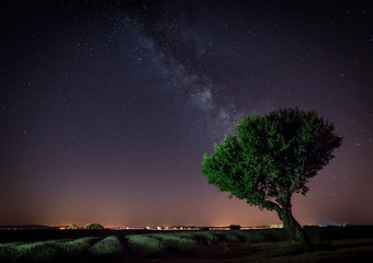 Stars, Milkyway and a lavender field blooming in Valensole, Provence France - Night Shot