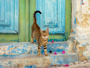 Brown tabby kitten in front of a colorful old wooden door, Rhodes, Greece