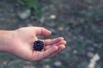 Big blackberry on the palm