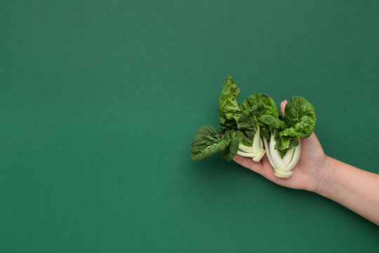 Female hand holding baby spinach on green background