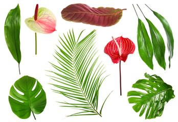 Wall Mural - Fresh tropical monstera leaf on white background