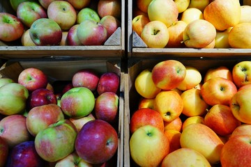 Crates of fresh heirloom apples at a farmers market