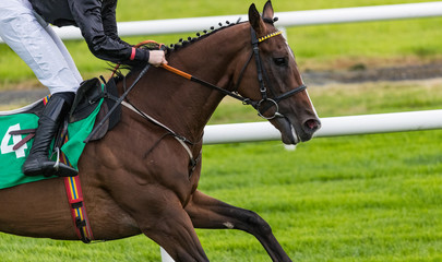 Close-up on single race horse and jockey galloping on the track
