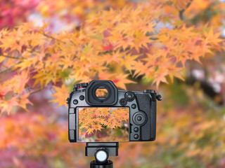 Digital camera with maple leaf 1
