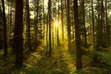 jesien w lesie Warmii