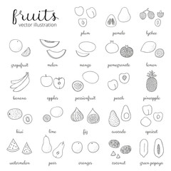 Hand drawn outline fruits isolated on white.