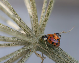 Ladybird insect and waterdrop