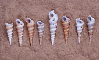 seashells on the sand, closeup