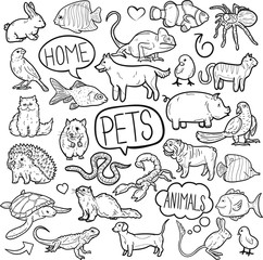 Pet Animal Shop Traditional Doodle Icons Sketch Hand Made Design Vector