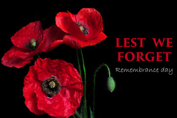 Poster Poppy Remembrance Day greeting card. Beautiful red poppy flower on black background with lettering
