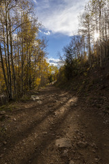 a trail through a beautiful aspen forest in fall colors
