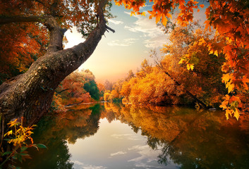 Wall Murals River Orange autumn on river