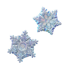 Two snowflakes isolated on white background. Macro photo of real snow crystals: elegant star plates with fine hexagonal symmetry, short ornate arms, glossy relief surface and complex inner details.