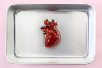 Human heart in a metal plate ready for organ transplant
