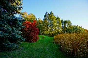 Beautiful autumn color -  autumn landscape - autumn pond