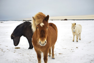 Horses standing at field in winter