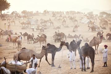 Men with camels at Pushkar Fair, India