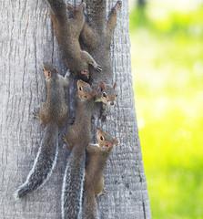 Squirrel Town