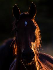 Horse portrait in back lit