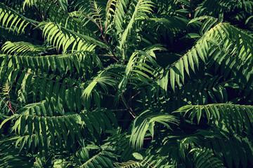 zielone liście krzewu