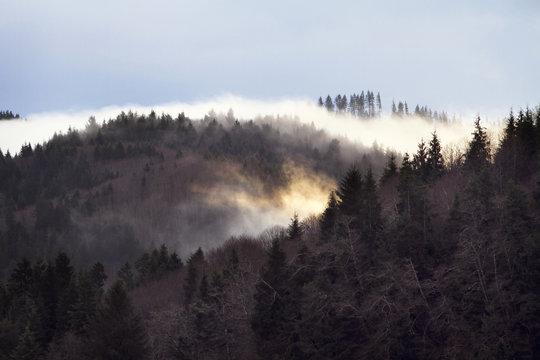 Fog over trees against sky