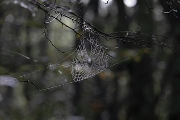 逆光で浮かび上がる朝露の蜘蛛の巣