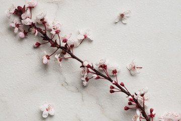 spring flowers, apricot or plum blossoms on marble background