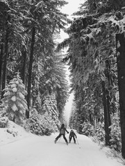 Children skiing in beautiful winter forest